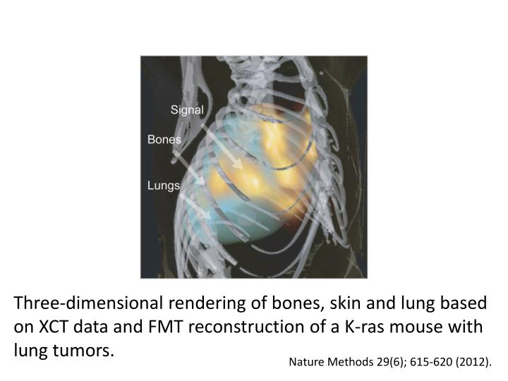 Three-dimensional rendering of bones, skin and lung based on XCT data and FMT reconstruction of a K-