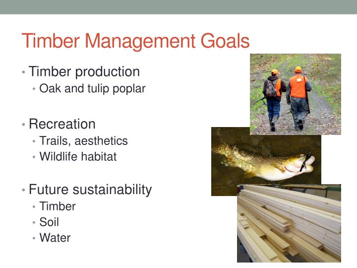 Timber Management Goals