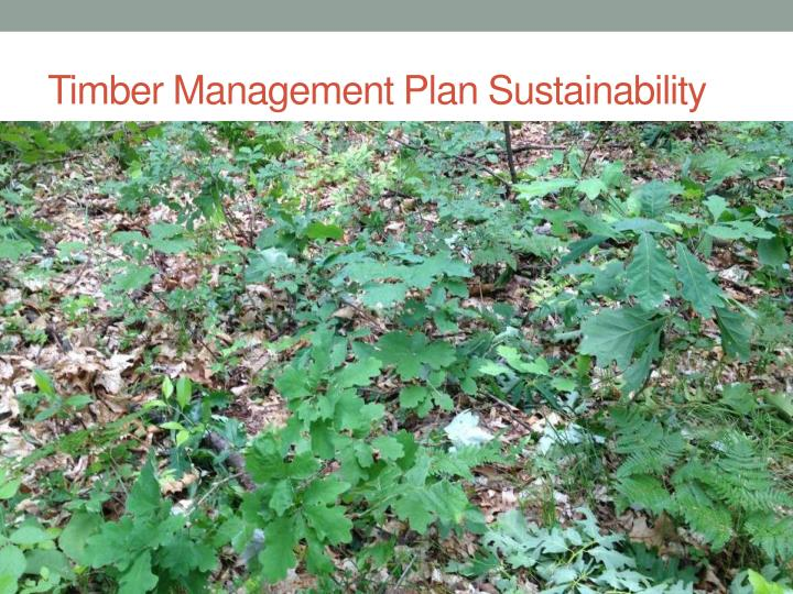 Timber Management Plan Sustainability