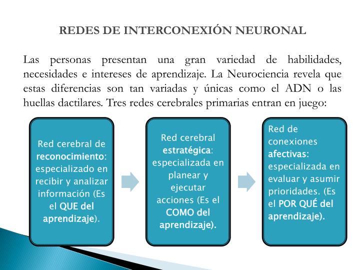 REDES DE INTERCONEXIÓN NEURONAL
