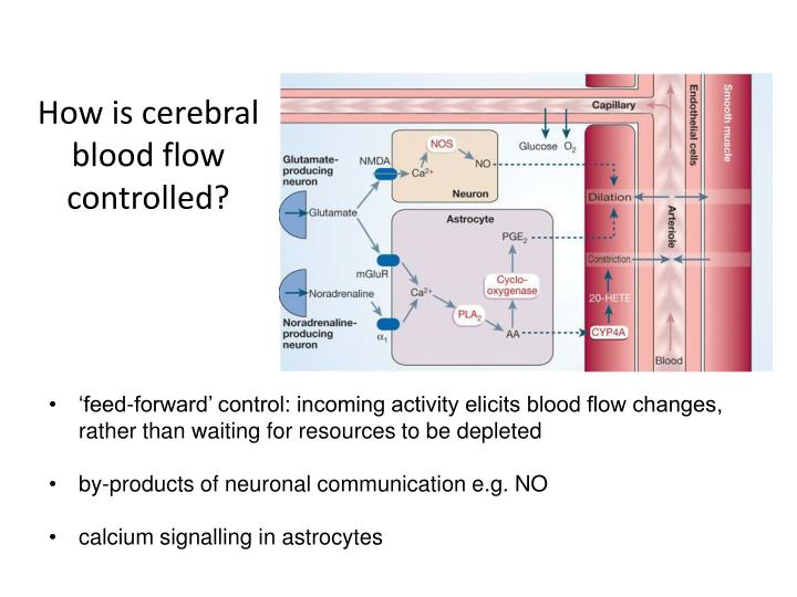 How is cerebral blood flow controlled?