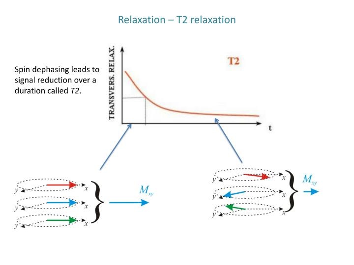 Relaxation – T2 relaxation