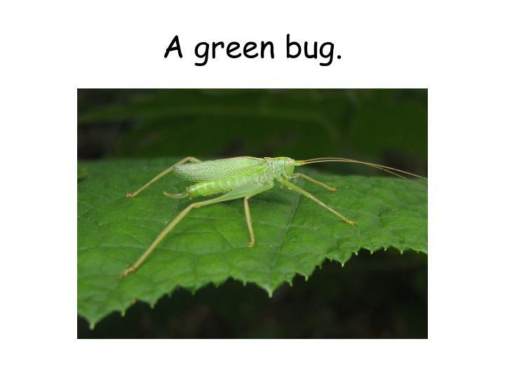 A green bug.