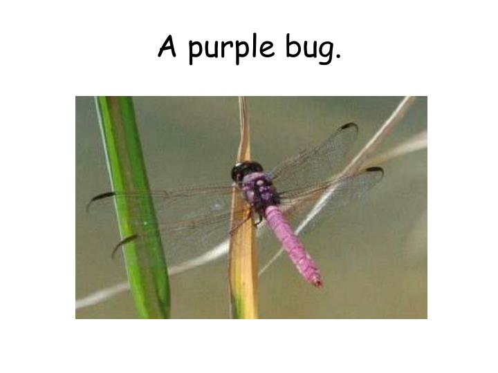 A purple bug.