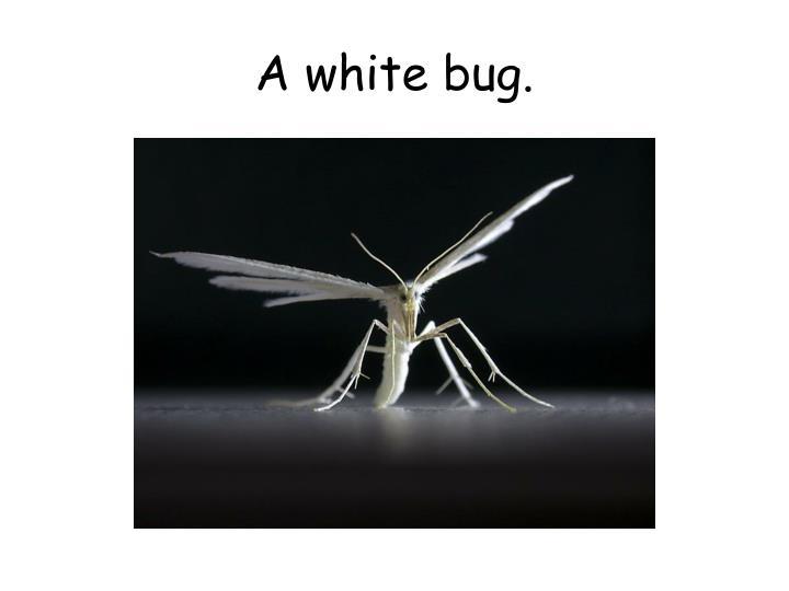 A white bug.