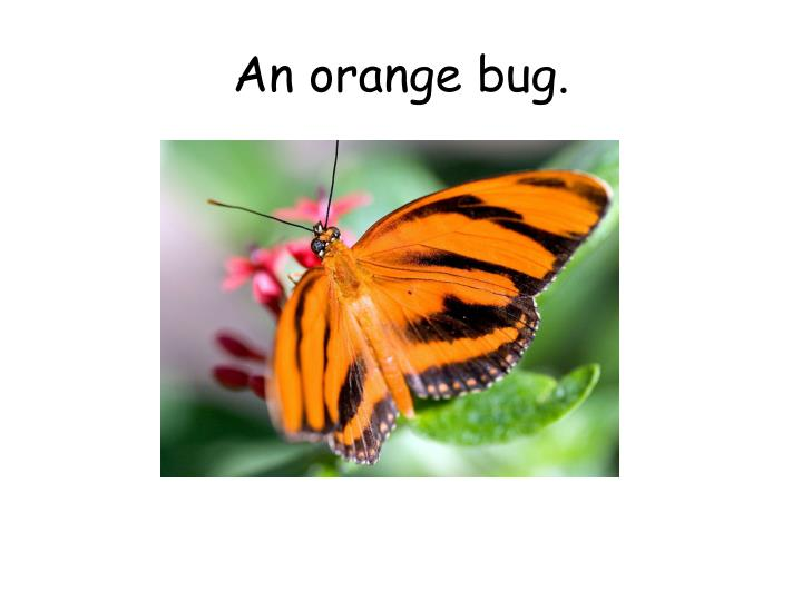 An orange bug.