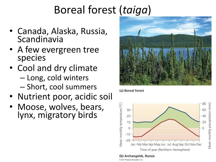 Boreal forest (