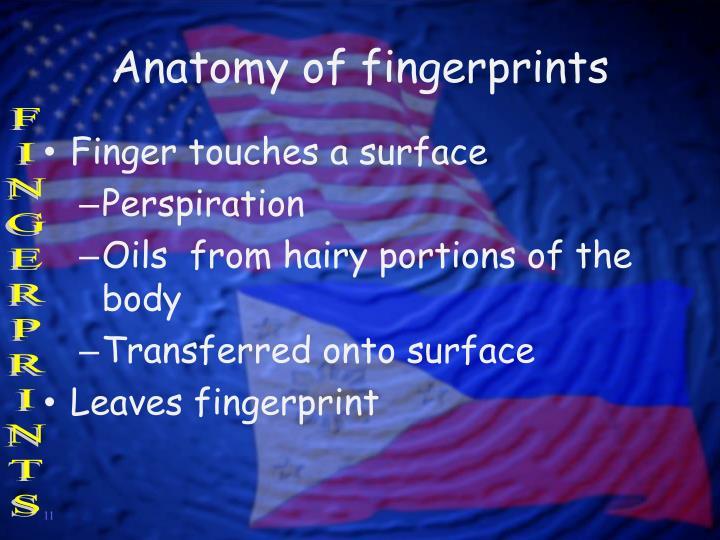 Anatomy of fingerprints