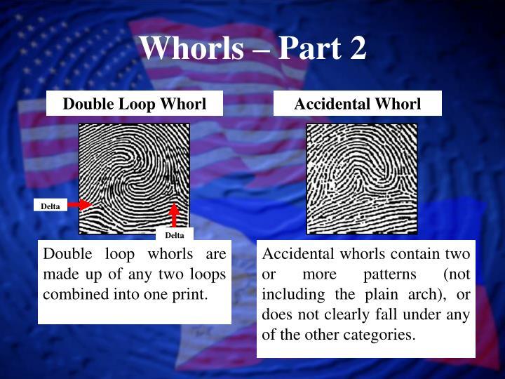 Double Loop Whorl