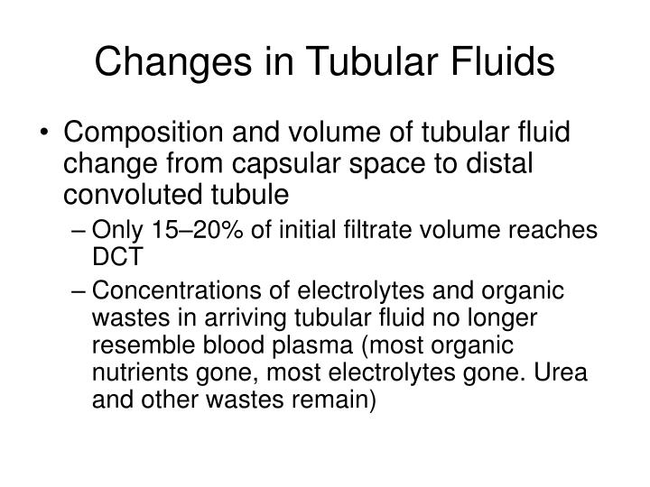 Changes in Tubular Fluids