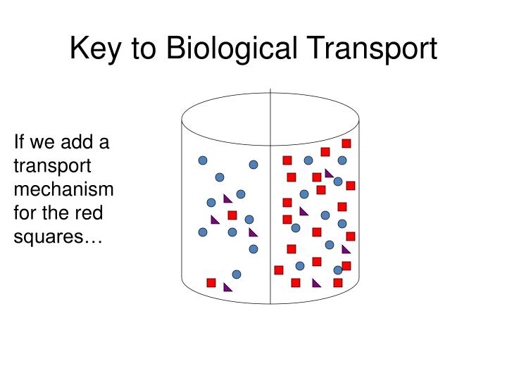 Key to Biological Transport