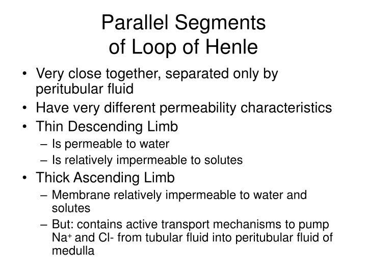 Parallel Segments
