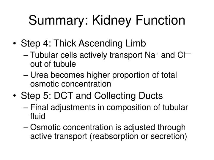 Summary: Kidney Function
