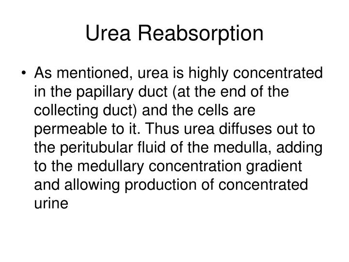 Urea Reabsorption