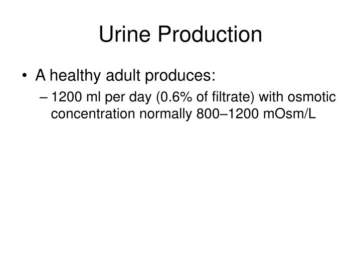 Urine Production