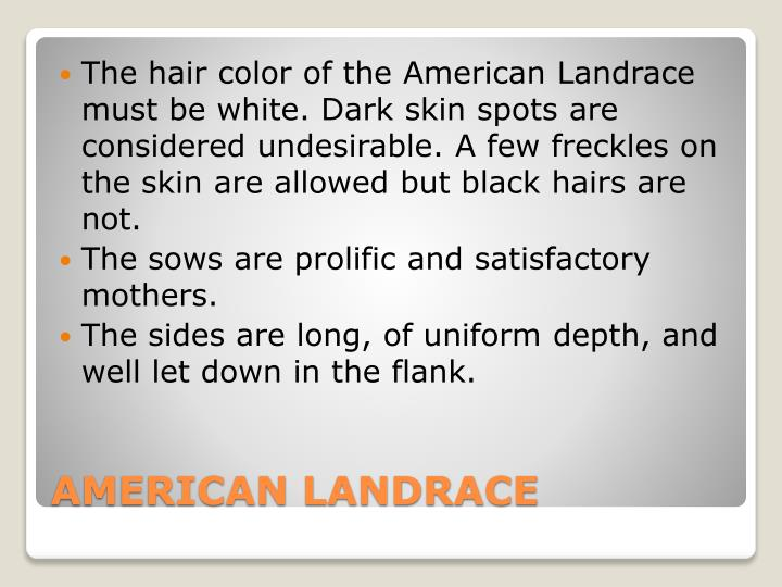 The hair color of the American Landrace must be white. Dark skin spots are considered undesirable. A few freckles on the skin are allowed but black hairs are not.