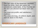 american landrace1