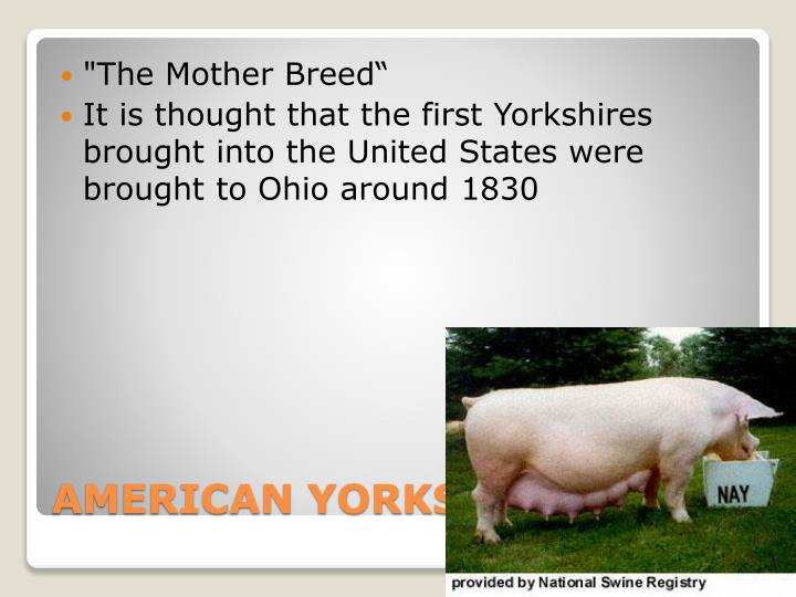 """The Mother Breed"""