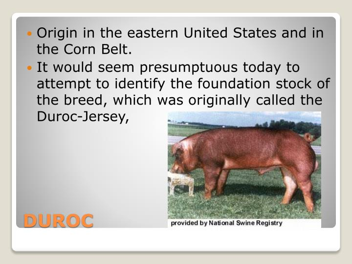 Origin in the eastern United States and in the Corn Belt.