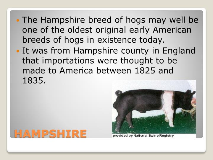 The Hampshire breed of hogs may well be one of the oldest original early American breeds of hogs in existence today.