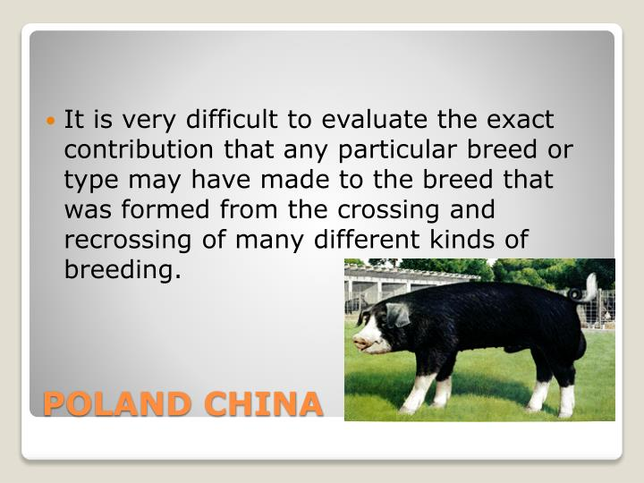 It is very difficult to evaluate the exact contribution that any particular breed or type may have made to the breed that was formed from the crossing and recrossing of many different kinds of breeding.