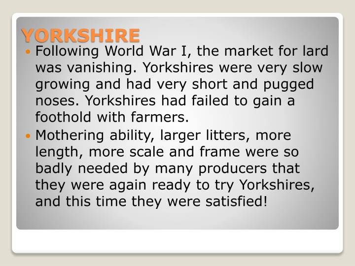 Following World War I, the market for lard was vanishing. Yorkshires were very slow growing and had very short and pugged noses. Yorkshires had failed to gain a foothold with farmers.