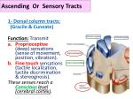 ascending or sensory tracts
