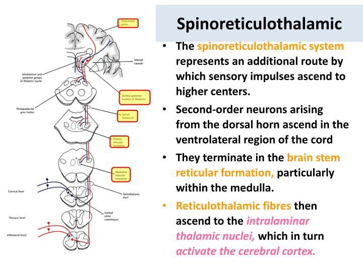 Spinoreticulothalamic