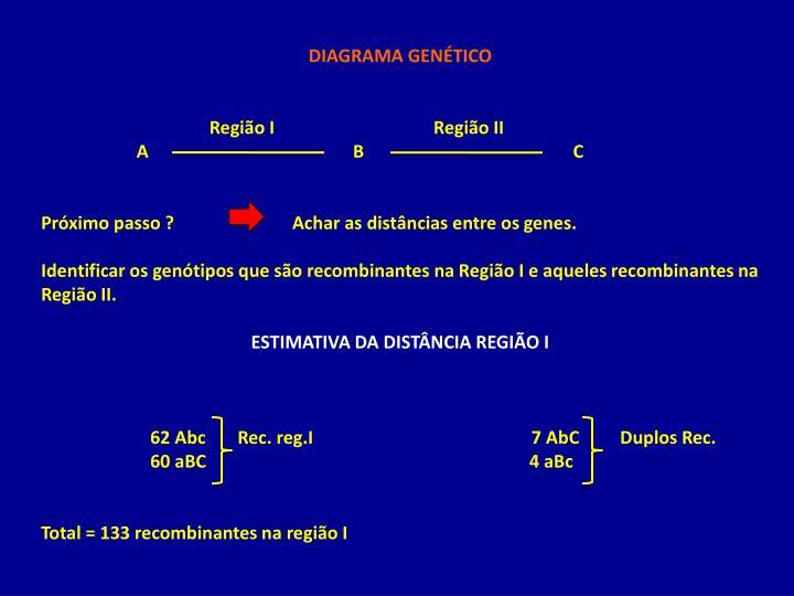 DIAGRAMA GENÉTICO