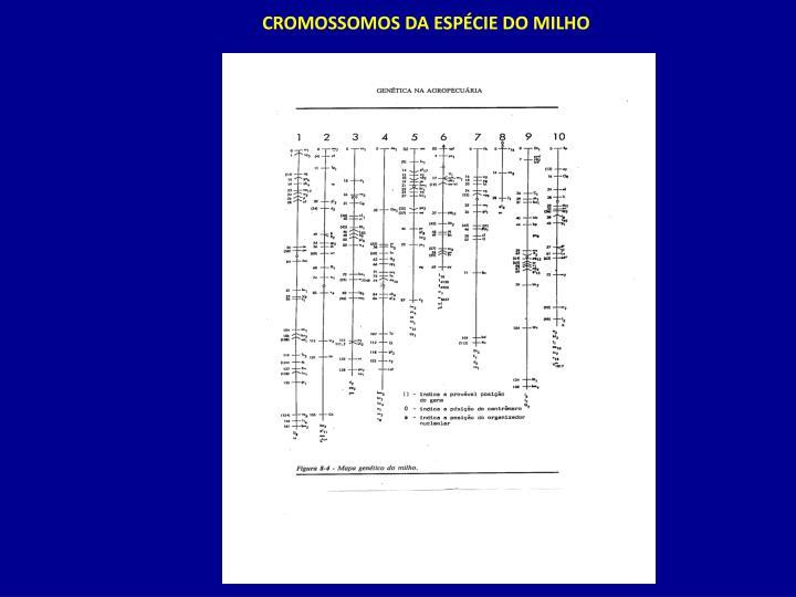 CROMOSSOMOS DA ESPÉCIE DO MILHO