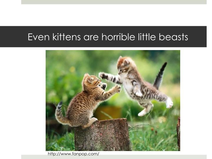 Even kittens are horrible little beasts