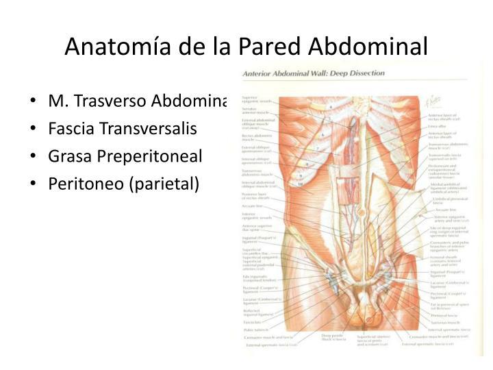PPT - Hernias de la Pa...