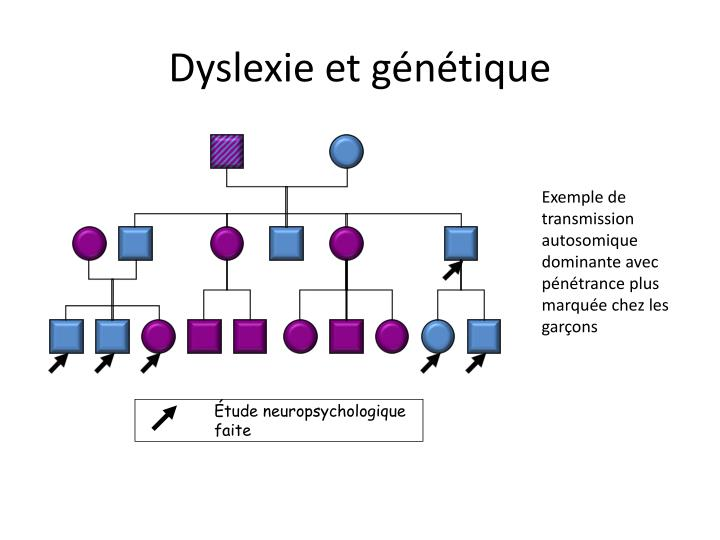 Dyslexie et génétique