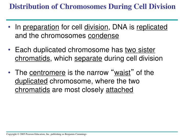 Distribution of Chromosomes During Cell Division