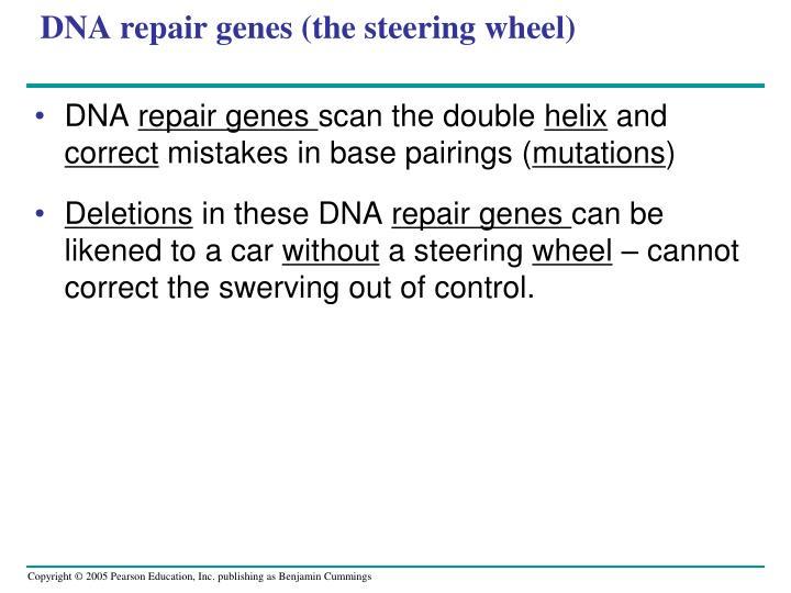 DNA repair genes (the steering wheel)