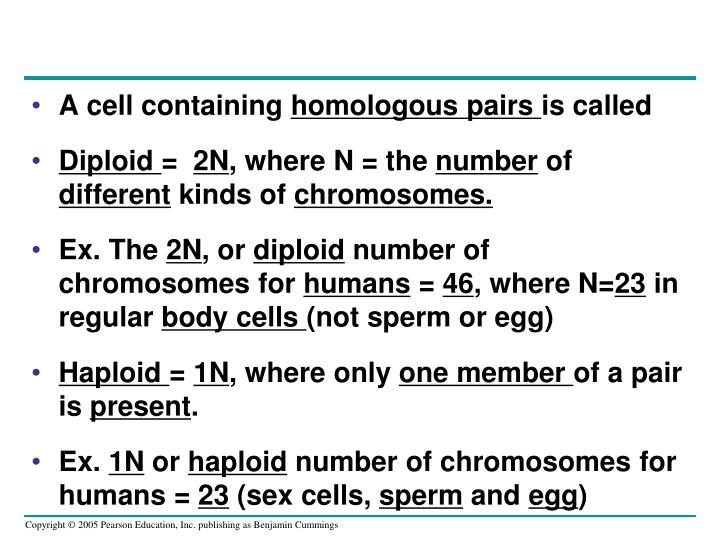 A cell containing