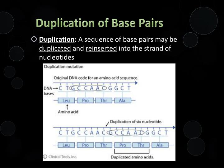 Duplication of Base Pairs