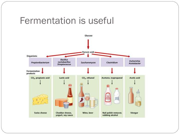 Fermentation is useful