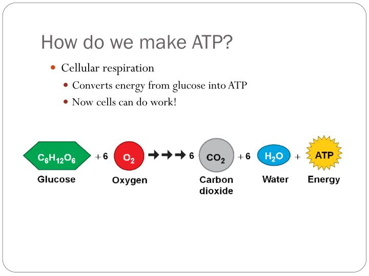 How do we make ATP?