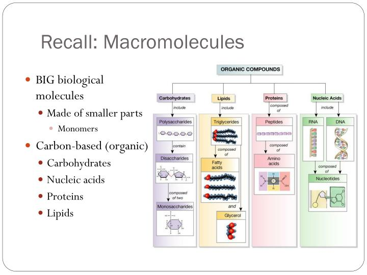 Recall: Macromolecules