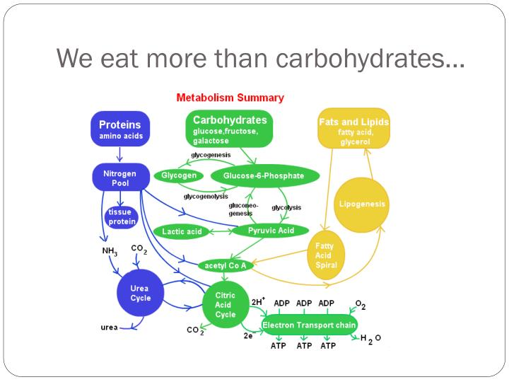 We eat more than carbohydrates…