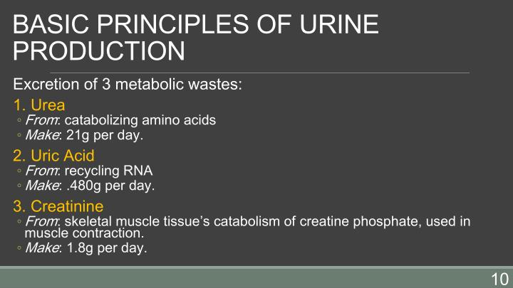 BASIC PRINCIPLES OF URINE PRODUCTION
