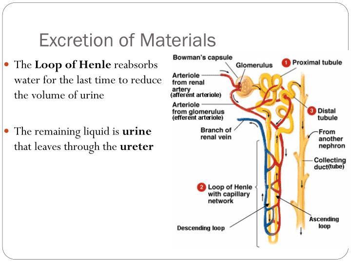 Excretion of Materials