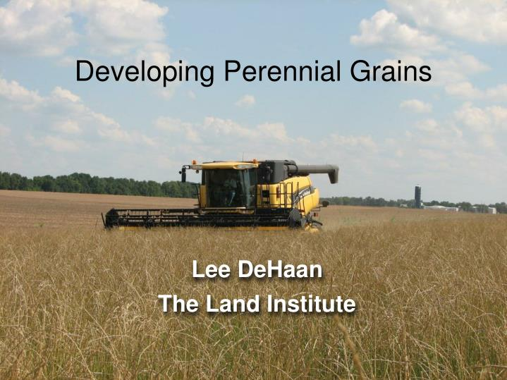Developing perennial grains
