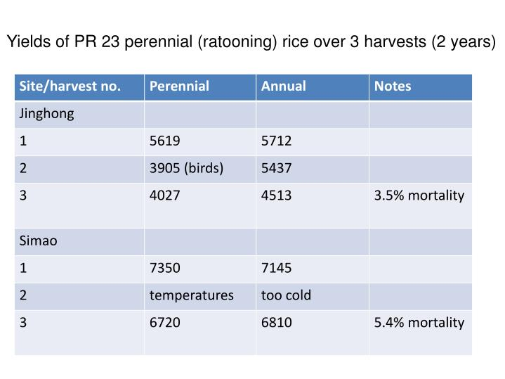 Yields of PR 23 perennial (