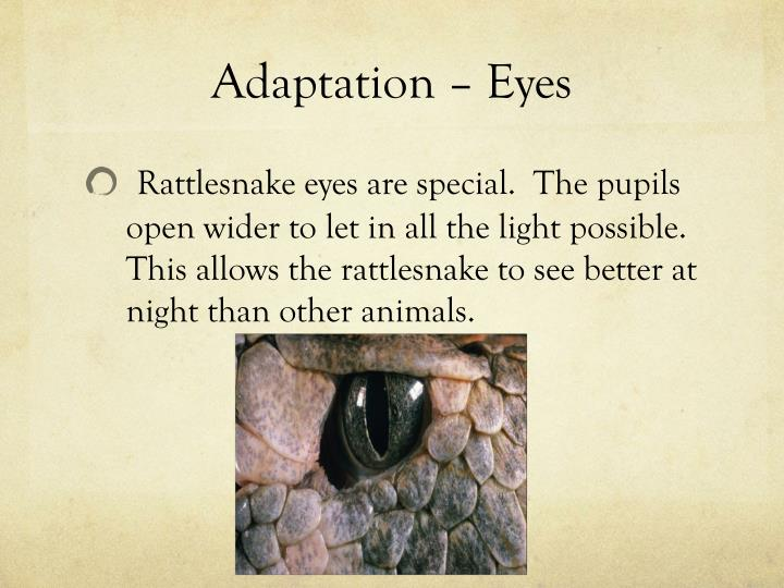 Adaptation – Eyes