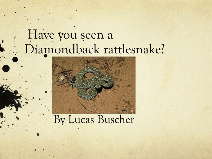 Have you seen a diamondback rattlesnake