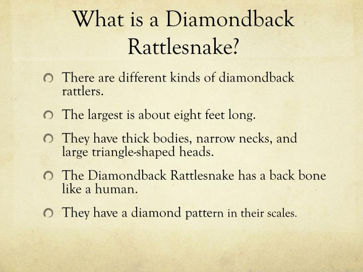 What is a diamondback rattlesnake