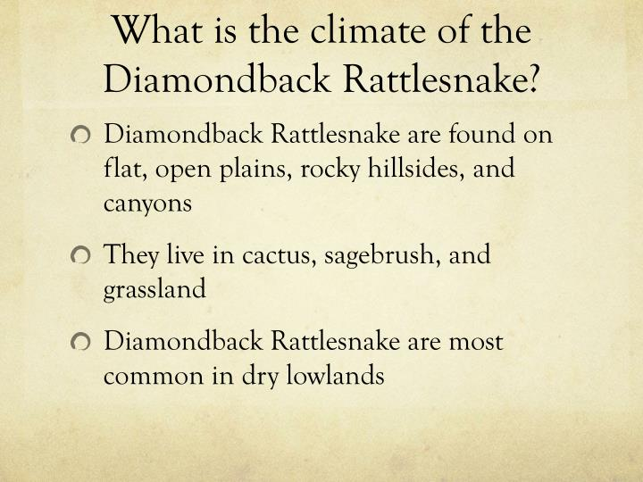 What is the climate of the diamondback rattlesnake