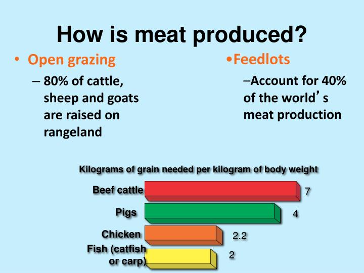 Kilograms of grain needed per kilogram of body weight